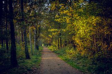 Waldweg im Herbstlicht