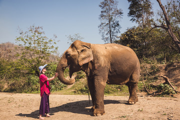 Woman with a Elephant in a park in Thailand.