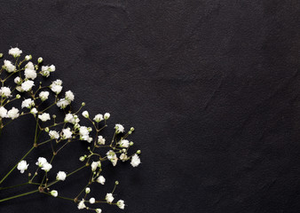 little beautiful white flowers on a black background