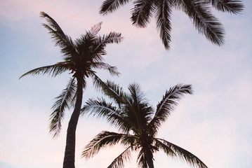 Silhouette of a Palm Trees Against the Purple Sky