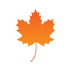 Maple leaf vector illustration, isolated on white background. Autumn realistic maple leaf graphic print or icon.
