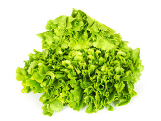 Escarole endive front view over white. Leaf vegetable and lettuce with broad, bitter leaves. Cichorium endivia var latifolia. Green salad head. Bavarian or Batavian endive, grumolo or scarola. Photo.