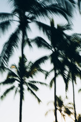 Abstract of palm trees