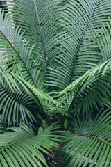Tropical ferns growing in rainforest