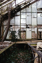 Nature reclaims an abandoned greenhouse.