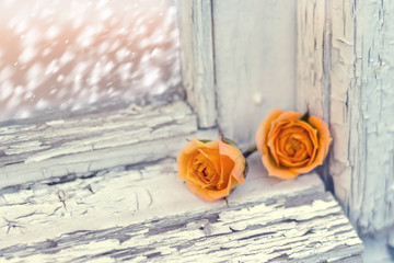 two small roses on old wooden window, snowfall behind