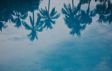 Reflection of palm trees in outdoor pool