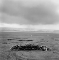 A Crab on the Beach in Black and White