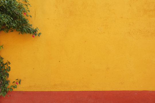 Mexican colonial yellow wall background with vine plant