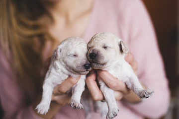 Young woman holding a newborn puppies