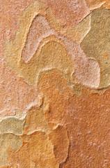 Stewartia bark patterns
