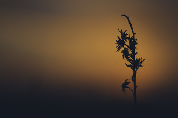 Detail of wild grass at sunset