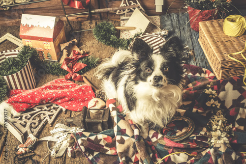 Australian Christmas Cards Free Download.Dog Christmas Cards Naughty Puppy Stock Photo And Royalty