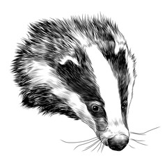 badger sketch head vector graphics color picture