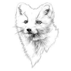 Arctic Fox sketch head vector graphics monochrome black-and-white drawing