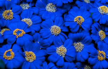 Spring Flowerrs