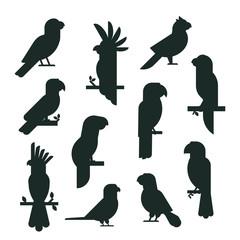 Parrots birds black silhouette animal nature tropical parakeets education colorful pet vector illustration