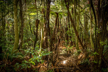 New Zealand Fern Bush