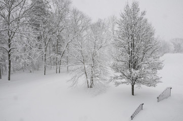 backyard trees in a snow storm