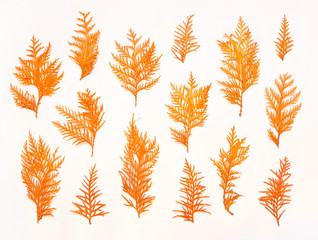 Autumn composition. Pattern made of autumn twigs of thuja on a white background. Flat lay, top view