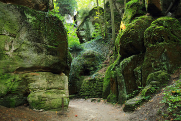 rocks in the green forest
