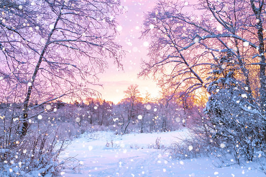 winter night landscape with sunset in forest