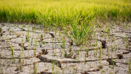 Dry crack earth at rice field