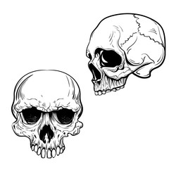 hand drawn anatomy skull . Vector