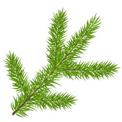 Simple pine tree branch with evergreen leaf, for Christmas and winter season. Realistic vector illustration, isolated on white