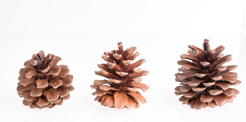 Pine cones isolated on white background,Christmas ornament