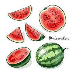 Illustration of whole watermelons and slices