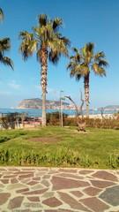Palmen am Meer in Alanya
