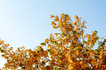 Beautiful and bright autumnal trees