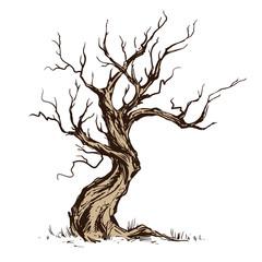 Handsketched illustration of old crooked tree.