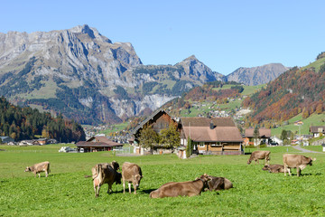 Aluminium Prints Grocery Rural landscape at the village of Engelberg on Switzerland
