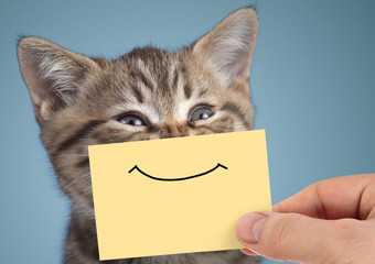 Papier Peint - happy cat closeup portrait with funny smile on cardboard