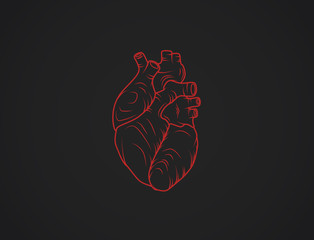 Human heart sketch. Anatomical heart illustration isolated. Enraved.