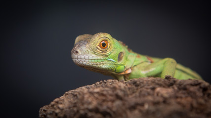 close-up of a green lizard on wood