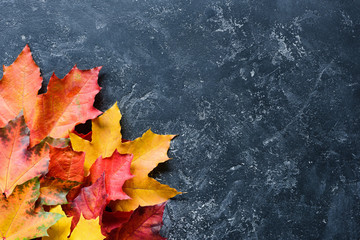 A Frame of Colorful Maple Leaves on dark slate with Copy Space for text