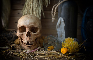 Still Life of Skull in the old barn in Halloween day