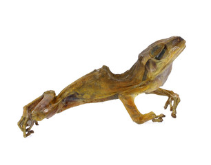 Dried frog isolated on white background.