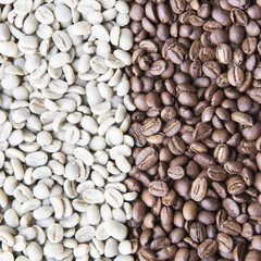 coffee beans background group of green and roasted arabica coffee beans concept of coffee state and agriculture