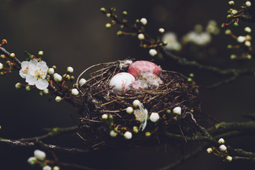 Eggs in a nest in a blossom tree