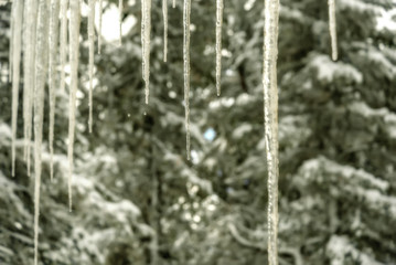 icicle ice spruce hang background