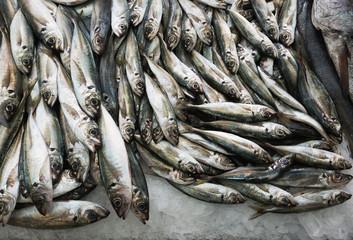 Sardines on ice at fish market
