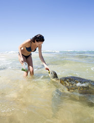 Tourist feeding turtle. Sri Lanka.
