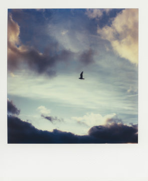 Small bird flying across sky at dusk,  SX-70 print