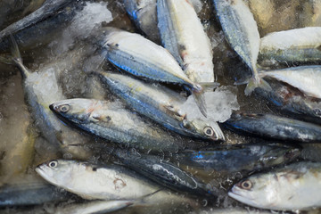 Indian mackerel ready to be sold in fish market.;