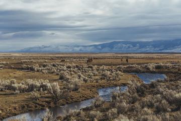 stream running through desert high lands