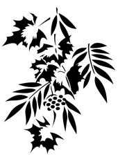 Stencil vector image of tree foliage. Maple, grapes, ash and mountain ash. Isolated on the background of a white color.